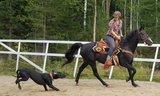 FLEX HORSE BOOTS_